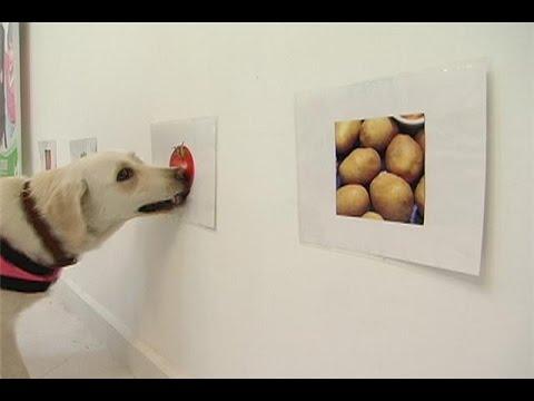dieta cetosisgenica para perros con cancer