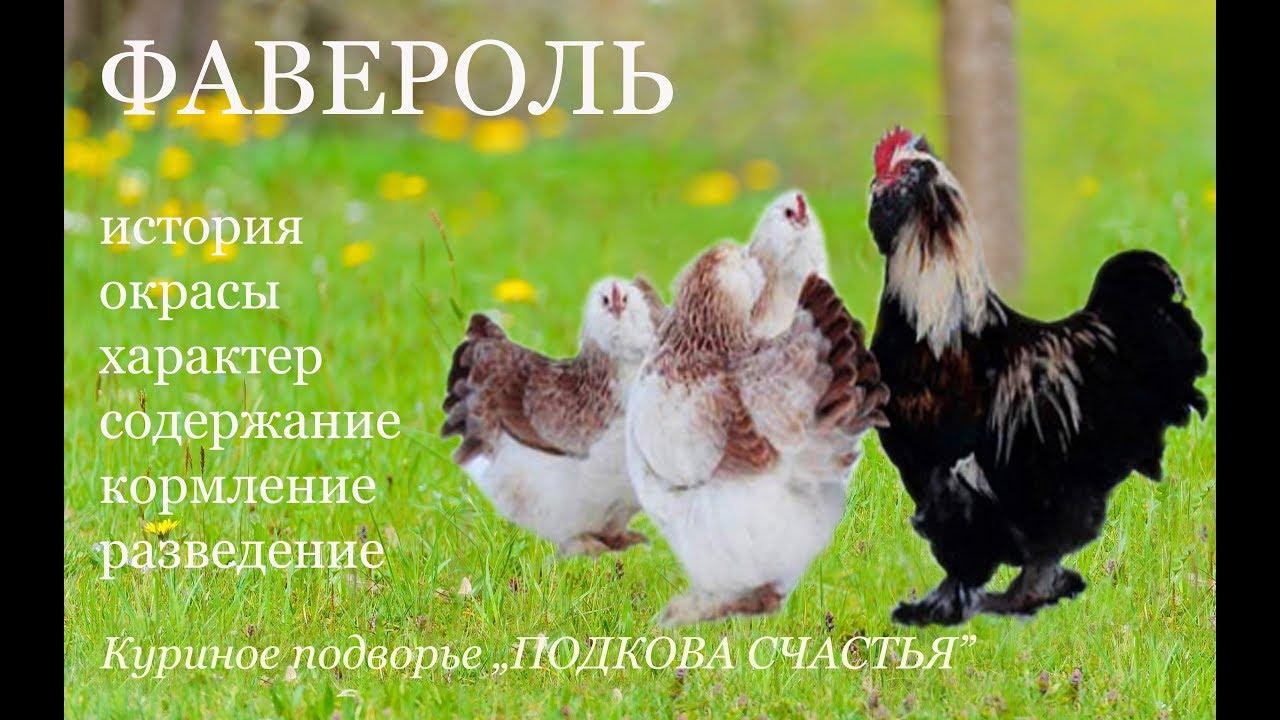 29 янв 2013. Декоративные куры в лпх феникс. Челябинская область. Обсуждение, много фото и другое видео здесь.