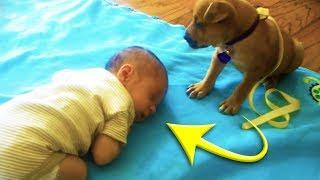 Eine Mutter filmte wie ihr Baby einschlief und erwischte den Moment, in dem ihr Hund näher kam