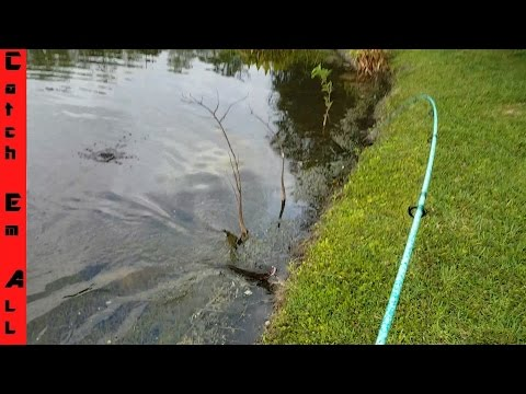 Best Fishing Lure for Bass and Snakeheads! DOOMSDAY TURTLE LURE?!