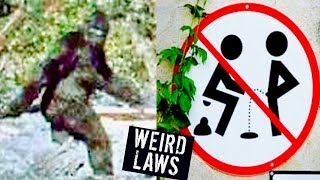 5 WEIRDEST LAWS IN THE WORLD