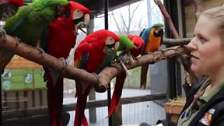 Meet our Macaws