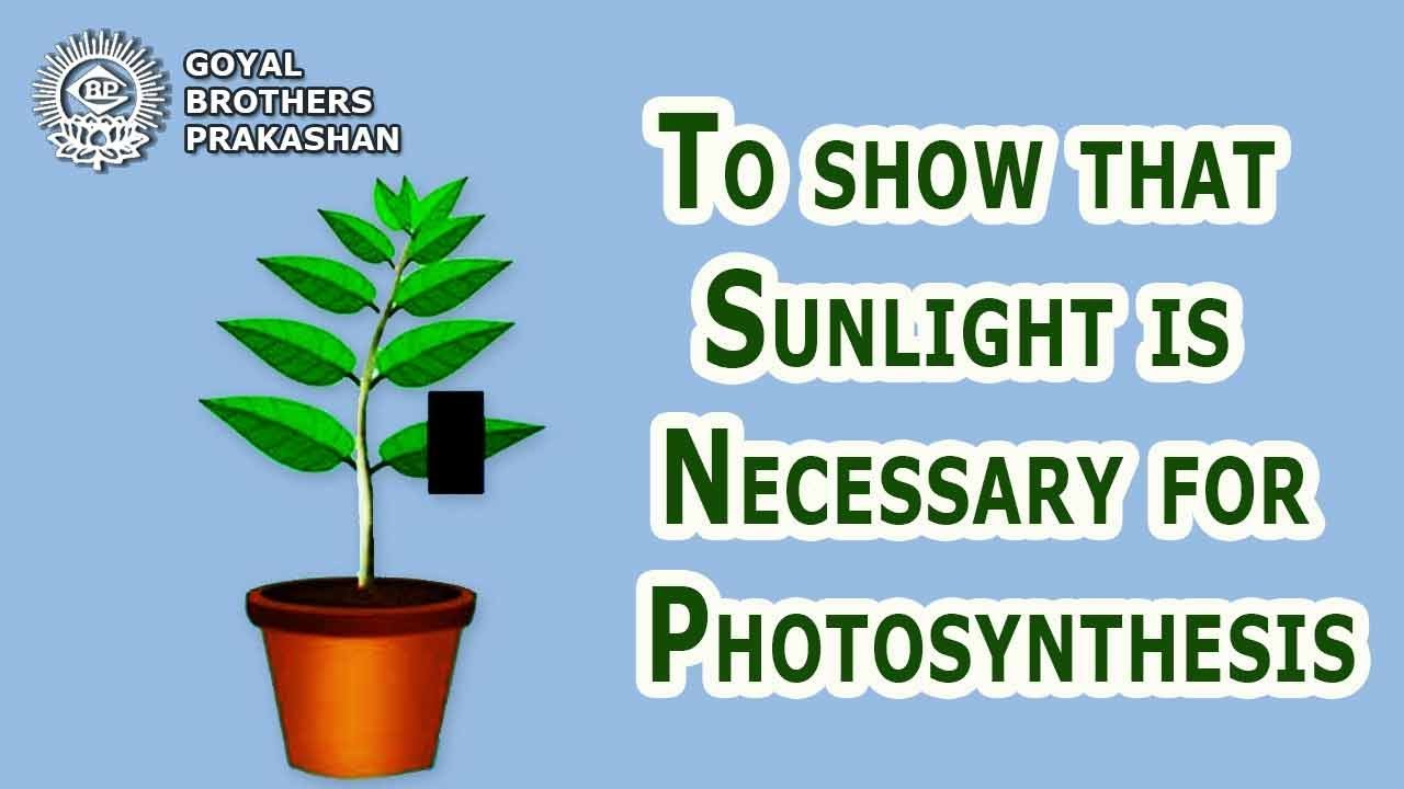 In how sunlight photosynthesis is used