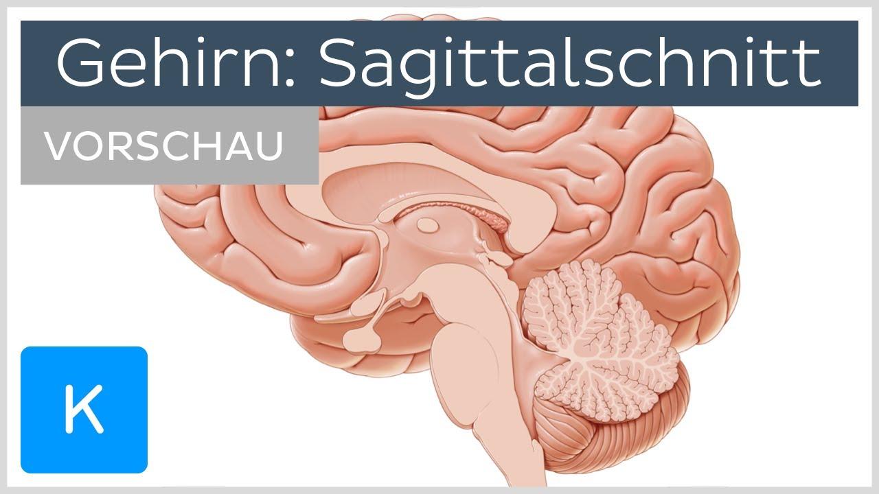 Gehirn: mediale Ansicht (Vorschau) |Kenhub