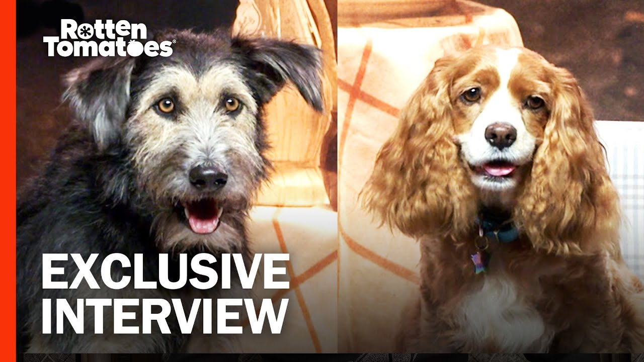 Download Tessa Thompson & Justin Theroux Give Props to Their 'Lady and the Tramp' Canine Co-Stars
