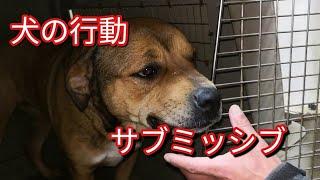 【オススメグッズ】 ルパインリード ソリッドカラー中型犬用 https://am...