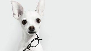 Собака лучше психолога: 10 аргументов.