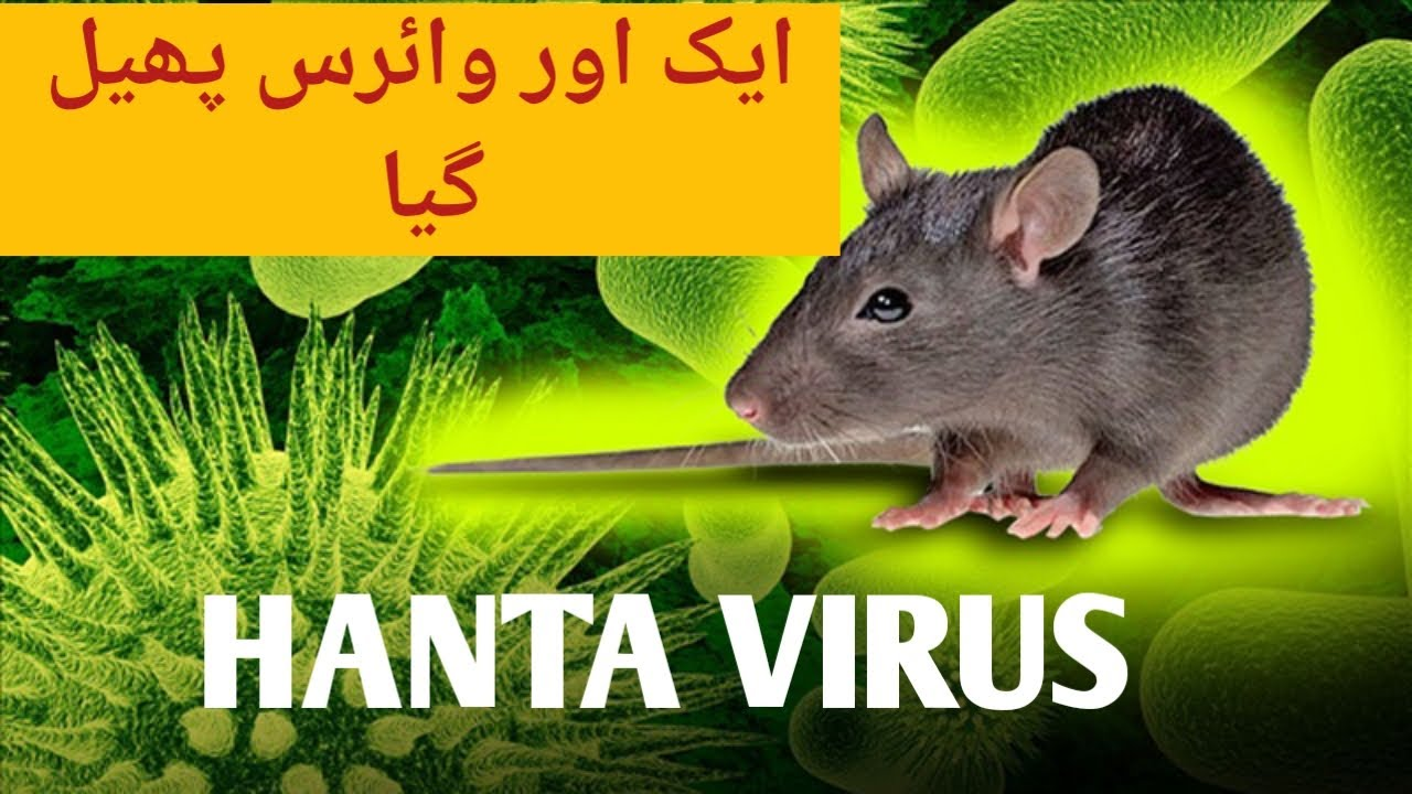 Hantavirus In China | Hantavirus Symptoms In Humans | New Virus ...