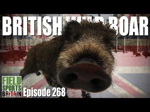 Fieldsports Britain - British Wild Boar