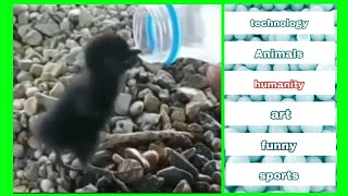 video viral 2019 || top videos of this week (humanity)-(art)-(technology)-(sports)-(funny)-(Animals)