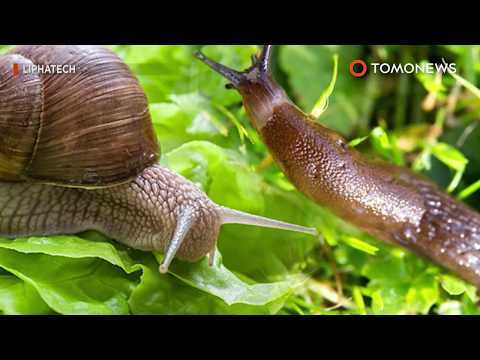 'Should I eat it?' Teen paralyzed after swallowing slug - TomoNews