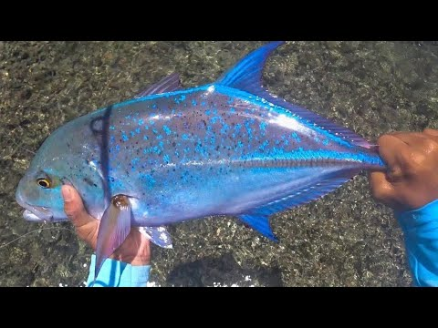 Catching A Big Papio On A Lucky Oama! -Fishing In Hawaii (200 SUBSCRIBERS)