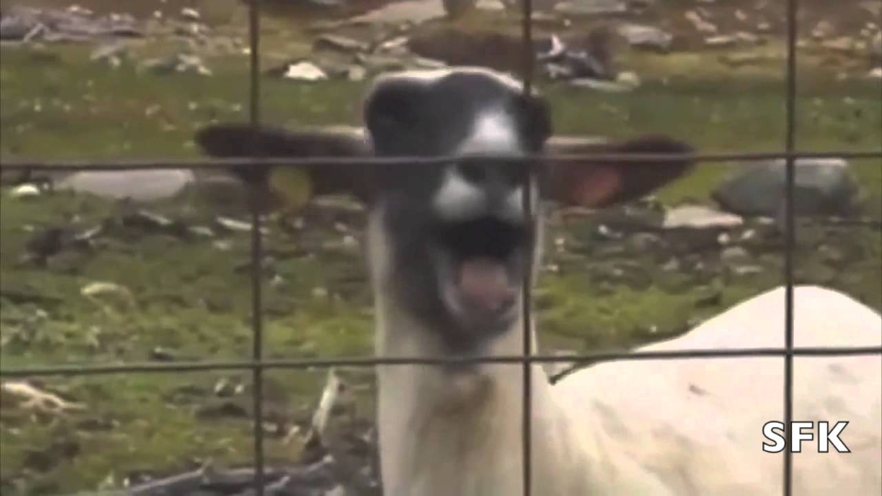 I Knew You Were Trouble Taylor Swift Ft Screaming Goat Youtube