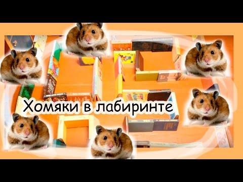 Смешные видео про хомяков: Погоня. Смешные хомяки)))