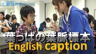 葉っぱの葉脈標本 テクノフェスタ 2014 - 静岡大学