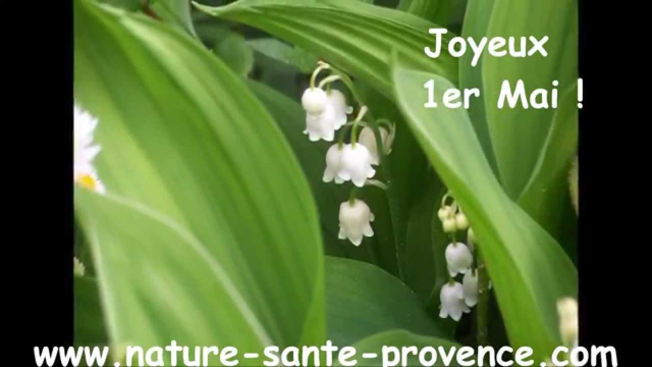 Comment Planter Du Muguet muguet du 1er mai en pot comment le faire refleurir l'année