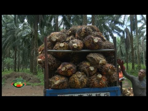 FARMERS MARKET: PAINS OF OIL PALM PRODUCTION