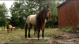 Native American Horse Preservation Program