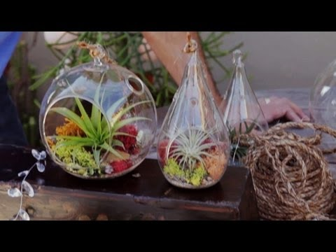 Air Plant Terrariums Tillandsia Care 2 5 Youtube