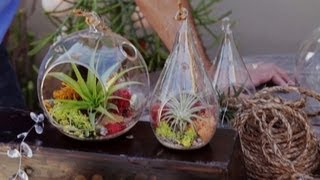 Air Plant Terrariums & Tillandsia Care (2.5)