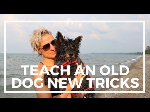 Can you teach an old dog new tricks? #vanlife