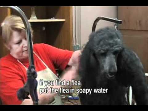 สอนตัดขนสุนัข สมายด็อกส์เตอร์_1