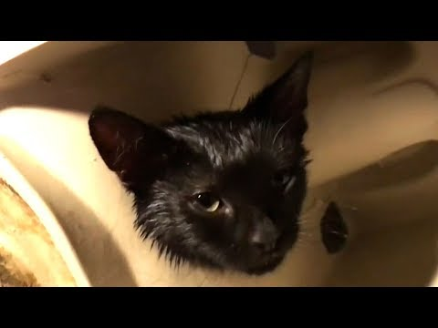 Maritime couple chronicles freeing kitten stuck in a toilet