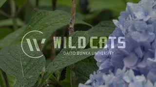a hand 大東文化大学吹奏楽団(WILD CATS)