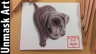 How to Draw a Chocolate Labrador Puppy | Colored Pencil Drawing Time lapse