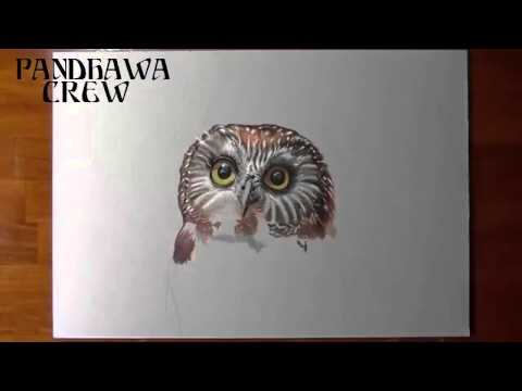 Amazing 3d Drawing Pencil Art | Owl