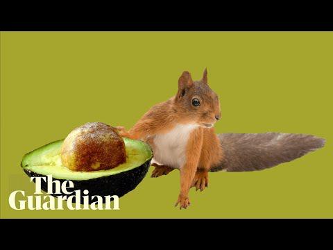 New York squirrel filmed snacking on avocado