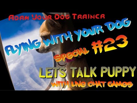 Flying with a Dog !! LIVE CHAT #23