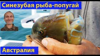 Рыбалка у необитаемого острова Грязевой. (видео 072)