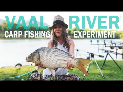 Carp Fishing Experiment At Vaal River, South Africa (Dec 2018) - To Dip Or Not To Dip?