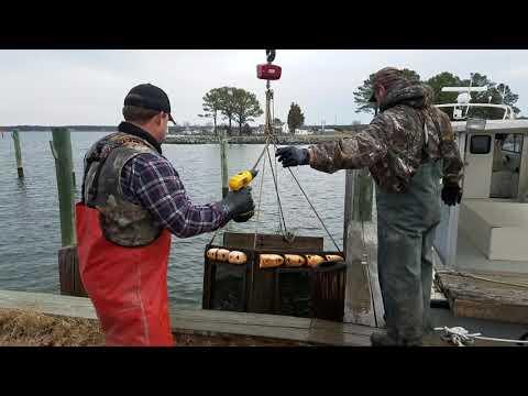 "Holland Seafood LLC - ""Live Eels on Wheels"""