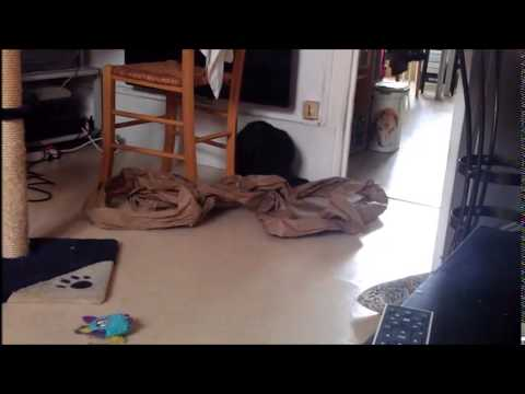 Une vie de chat youtube