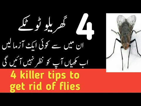 how to get rid of mouse in house naturally