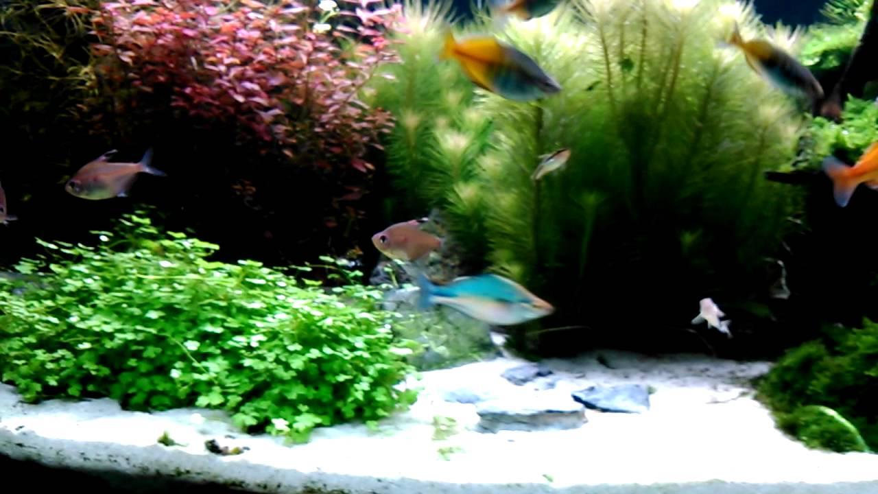 regenbogenfische im 300 liter aquarium. Black Bedroom Furniture Sets. Home Design Ideas