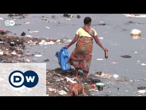 Mumbai's mangroves under threat  | Global 3000
