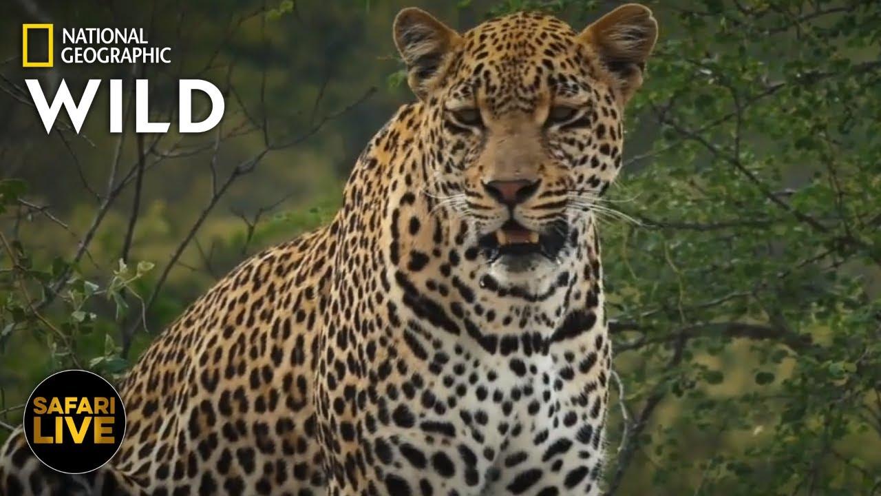 Safari Live - Day 289 | Nat Geo Wild