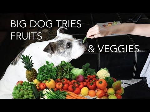big-bulldog-tries-fruits-&-veggies- -skip2mylou