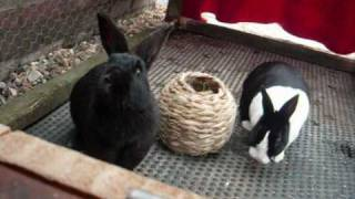 How To Clean Out An Out Door Rabbbit Hutch Part 1