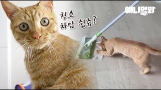 이 고양이는 좀 치우고 살라고 맨날 잔소리하는 울 엄마…