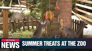 Seoul Zoo comes up with ideas to make sure its animals stay healthy during summer