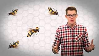 видео Как медоносные пчёлы делают мёд из нектара?