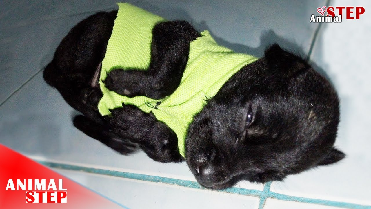 Download Rescue Wounded & Malnourished Stray Puppy with a Heartbroken