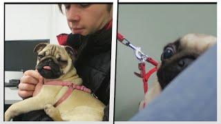 Pug Experiment | Moretdm
