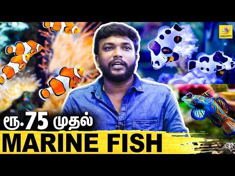 அழகிய கடல் மீன்கள் ஏமாறாமல் எப்படி வாங்கணும்.. MARINE FISH   Chennai