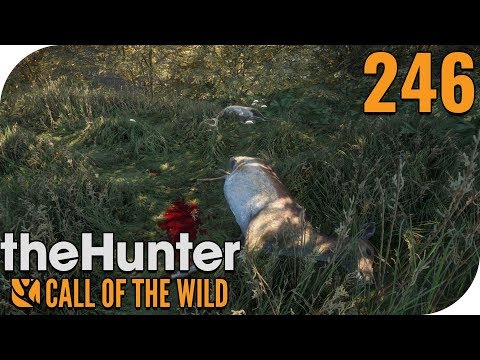 THE HUNTER: CALL OF THE WILD #246 - LEISER BOGEN! 🐗 || PantoffelPlays
