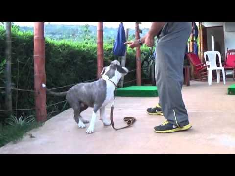 adiestramiento-canino-cali---enviar-a-un-sitio---proceso-cognitivo